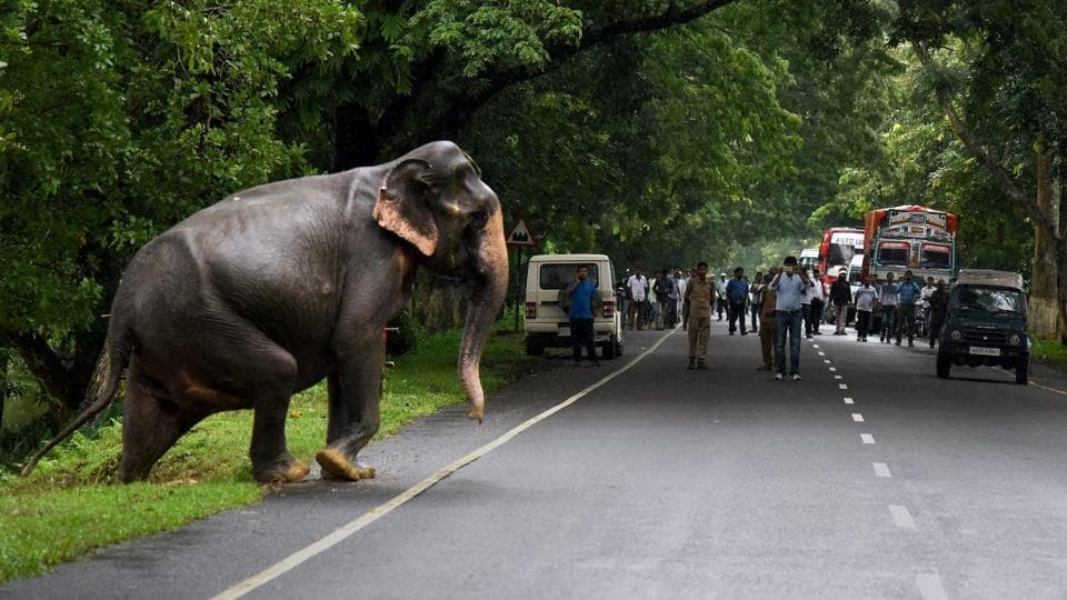 'It is a routine migration process. There are some highlands inside the Kaziranga National Park where the animals take shelter during floods. However, some animals like the deer and elephants migrate to the higher grounds in Karbi Anglong during floods,' park director Satyendra Prasad Singh told IANS. (PTI)