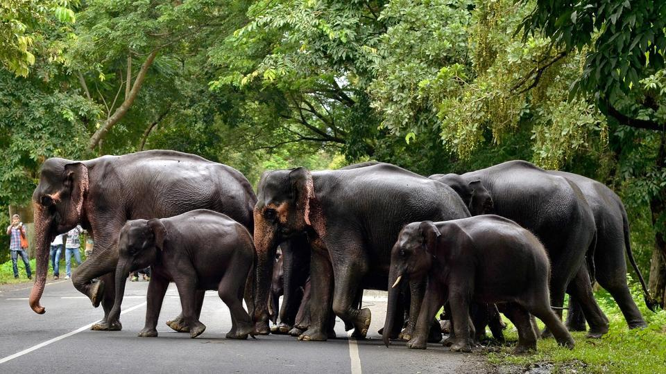 A herd of elephants cross a road that passes through the flooded Kaziranga National Park in the northeastern state of Assam. (Anuwar Hazarika  / Reuters)