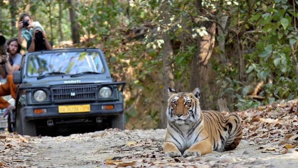 Corbett national park has more than 200 Royal Bengal tigers.