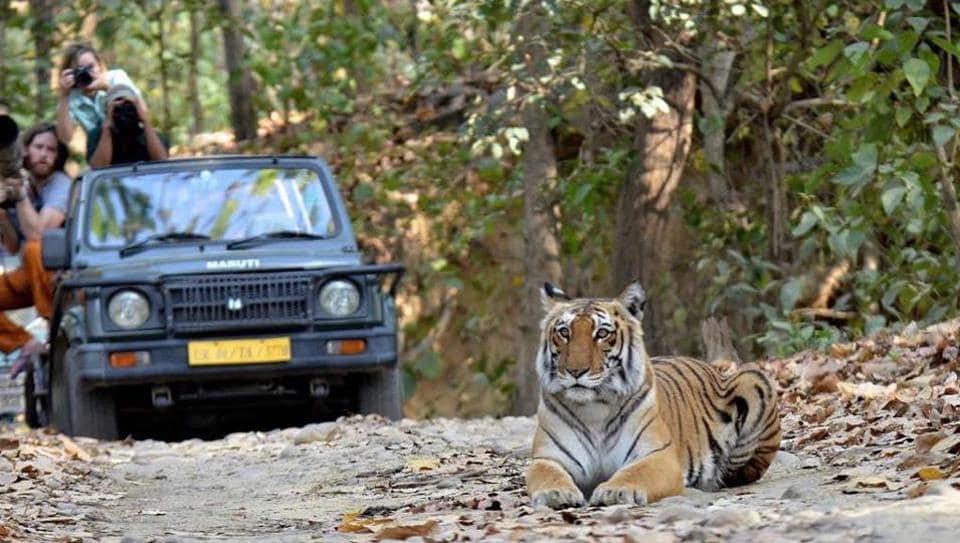Corbett national park has more than 200 Royal Bengal tigers.