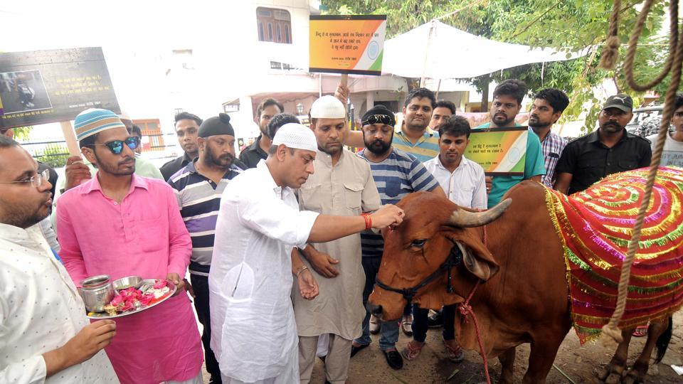 Muslim filmmaker performs house warming rituals for a cow and a calf at his house at Vigyan Nagar area in Kota on Sunday.