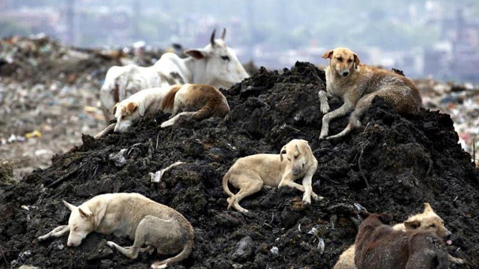 landfills,ghazipur,garbage dumps