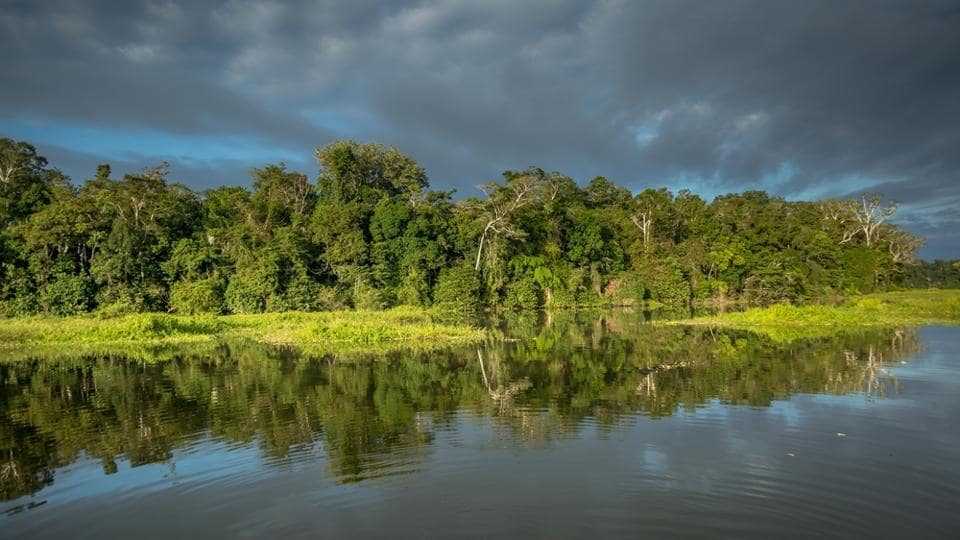 Manu National Park has a variety of bird, mammal, fish, insect, reptile and plant species.