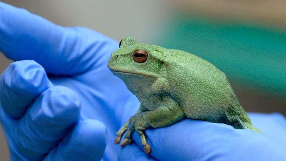 Ecuador,Poachers,Frogs