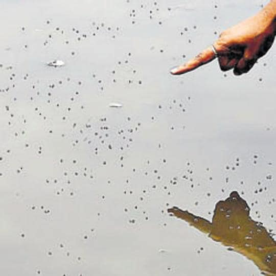 Proper care must be taken to ensure that there is no stagnant water, garbage or scrap lying around which can become a breeding ground for mosquitoes