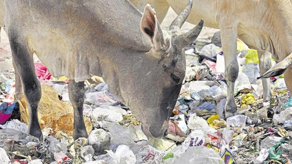 Plastics,plastic waste,plastic bags