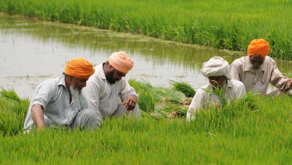 As many as 54,753 bags of paddy were found embezzled.