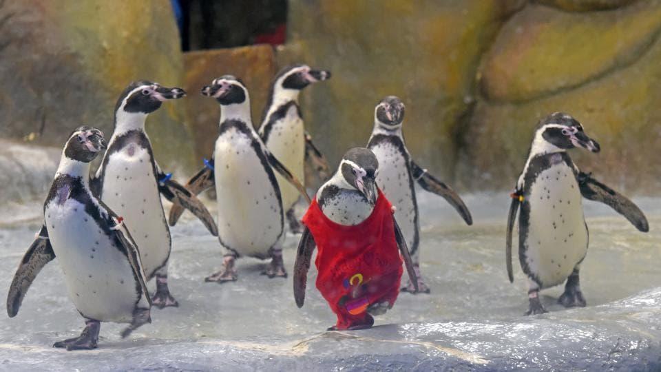 Mumbai penguins,Penguins in Mumbai,Mumbai zoo penguins