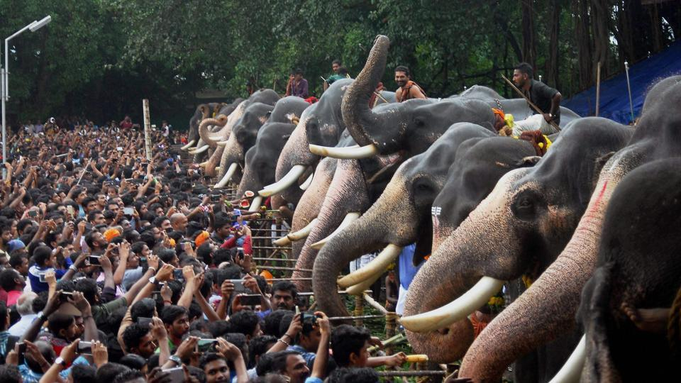 People feed elephants at the Vadakkunnathan Temple in celebration of the commencement of the Malayalam month of Karkkidakam. (PTI)
