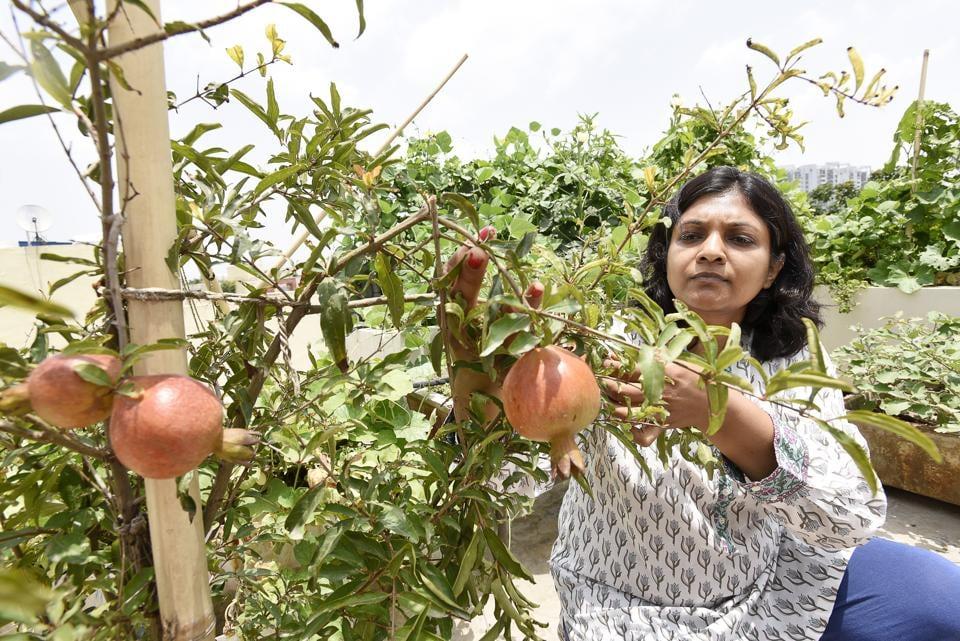 Kitchen Garden,Organic Kitchen Garden,Gurugram