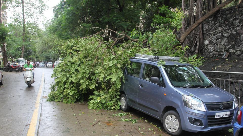 Each ward is inspected in the pre-monsoon survey and a list of trees that need pruning is prepared.
