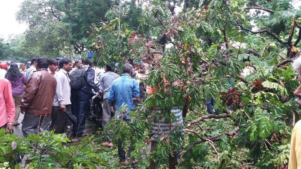 Mumbai,tree fall,tree collapse