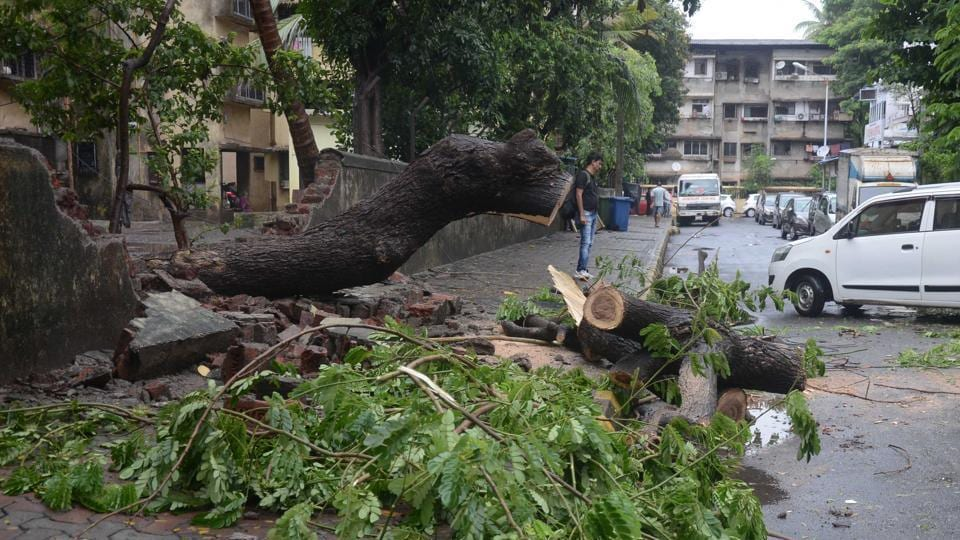 Between June 1 and July 24, the civic body has received 1,404 tree-fall complaints as against the 1,700 such complaints it had received from June to September in 2016.