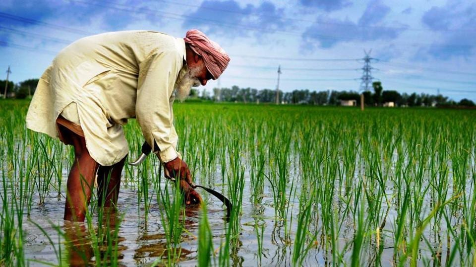 Punjab's farming sector outlay this fiscal is Rs 10,581 crore, 9% of the total budget of Rs 1.18 lakh crore for the state.