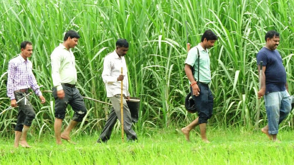 Tiger is still in sugarcane fields outside the PTR, officials have run out of cash to carry on their search.