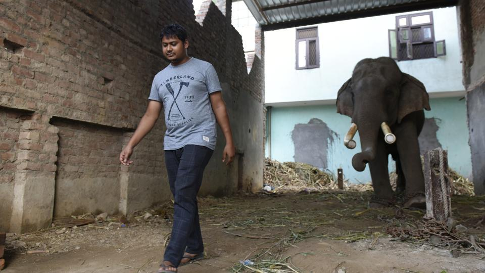 Hira, one of the seven domestic elephants in the capital, at his owner's house in Wazirabad. As the forest department plans to shift the animals to a sanctuary, the owners say the animals will die if they are separated from them.