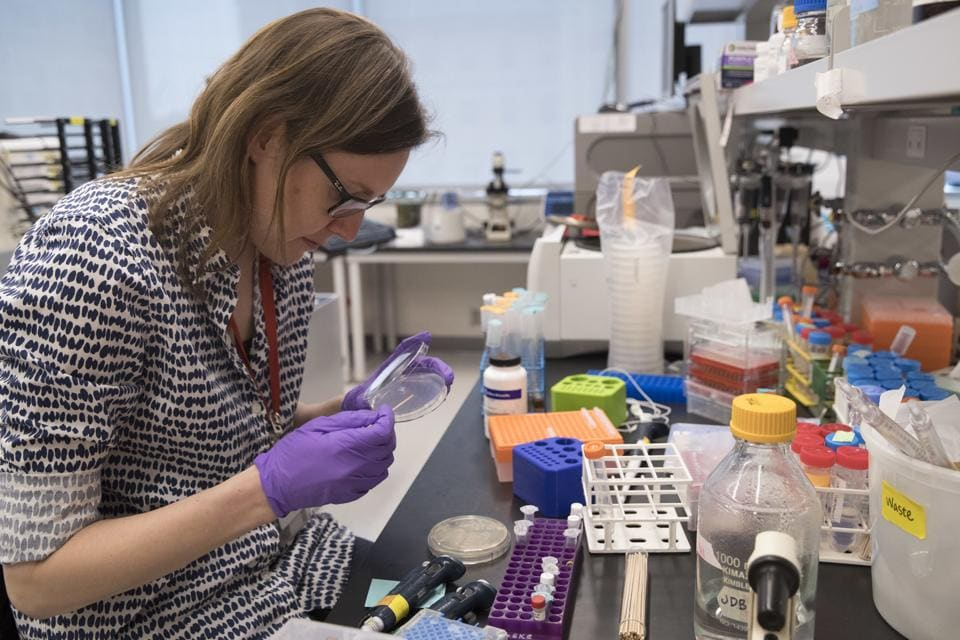 Post doctoral fellow Leslie Mitchell works at her bench at a New York University lab in the Alexandria Center for Life Sciences in New York, where researchers are attempting to create completely man-made, custom-built DNA.