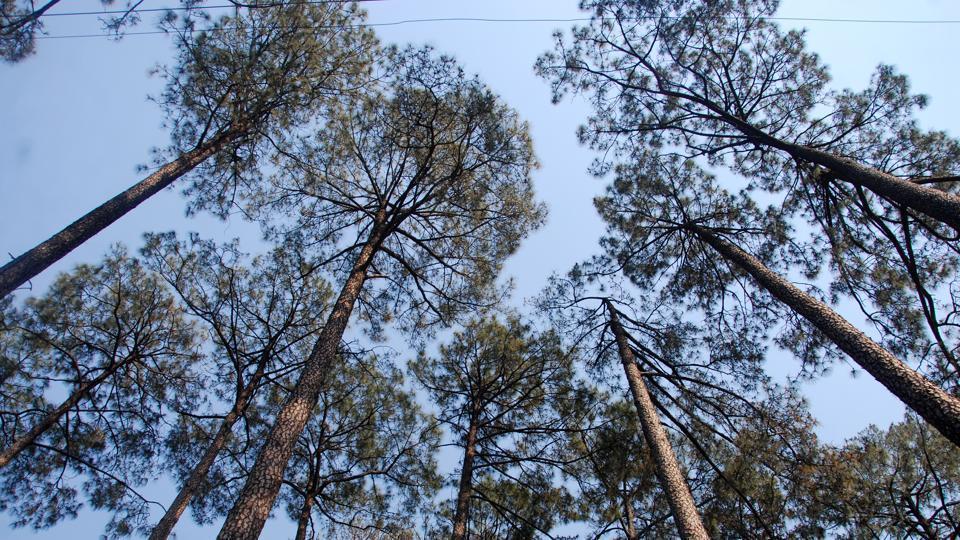 Uttarakhand,Chard Dham,trees
