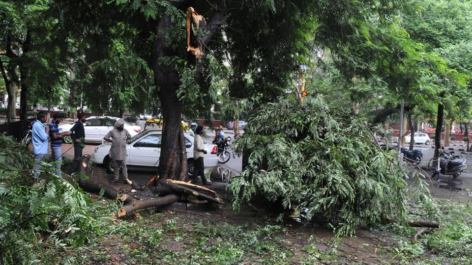 A tree fell on the street at sector 17, Chandigarh, after heavy rain on Thursday. (Anil Dayal/HT Photo)
