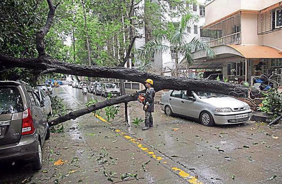 Mangled remains of a car after a tree fell on it at Panchpakhadi, Thane, on July 14.
