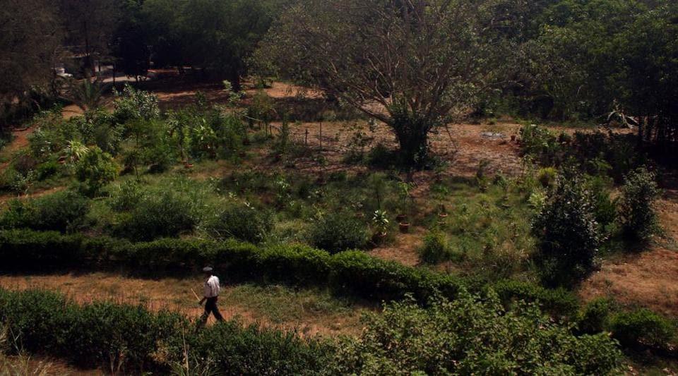 Mumbai,Mahm nature park,Maharashtra