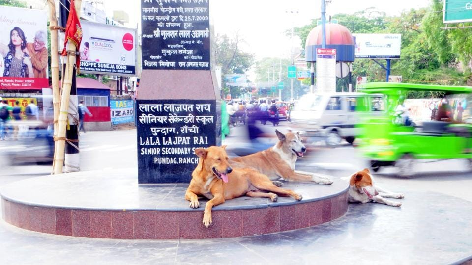 Delhi HC,Stary dogs,Canine
