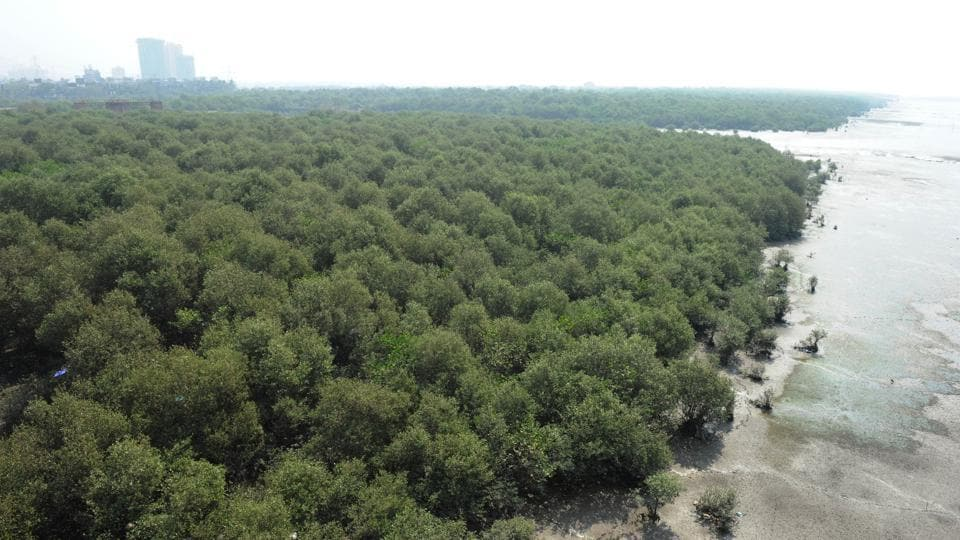 Mangrove forests grow in creeks, estuaries, bays and lagoons and in inter-tidal areas.