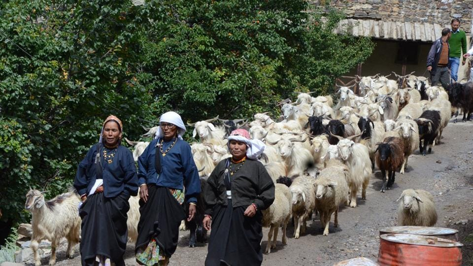 Bhotiya nomads with their sheeps in the Niti valley.