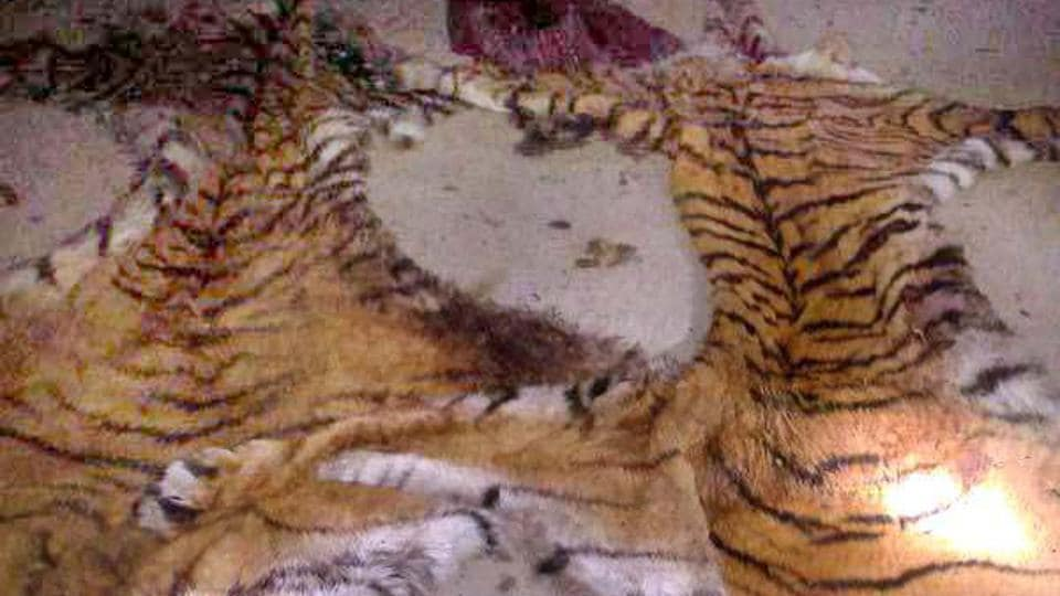 Tiger skins command high prices in the black market due to demand from trophy collectors.