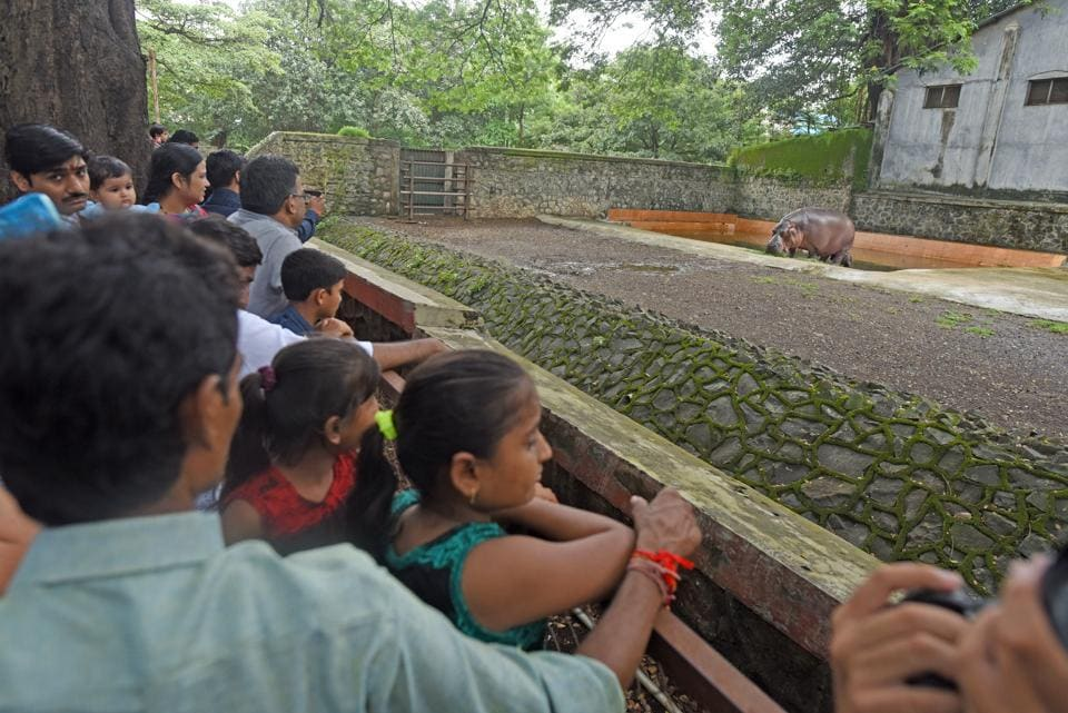 Seven firms met senior civic officials on Thursday in connection with building 17 animal enclosures at the zoo.