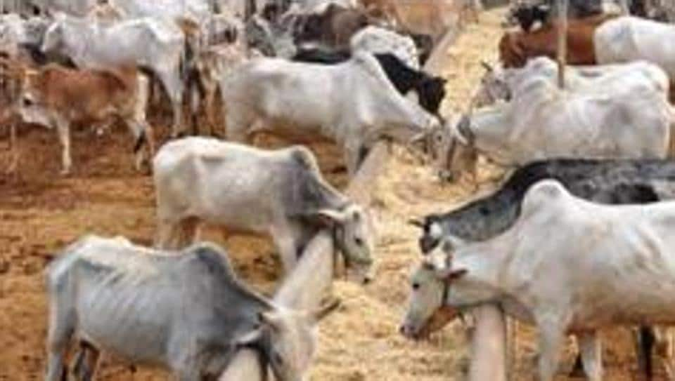 Cow slaughter,Cattle ban,Supreme Court