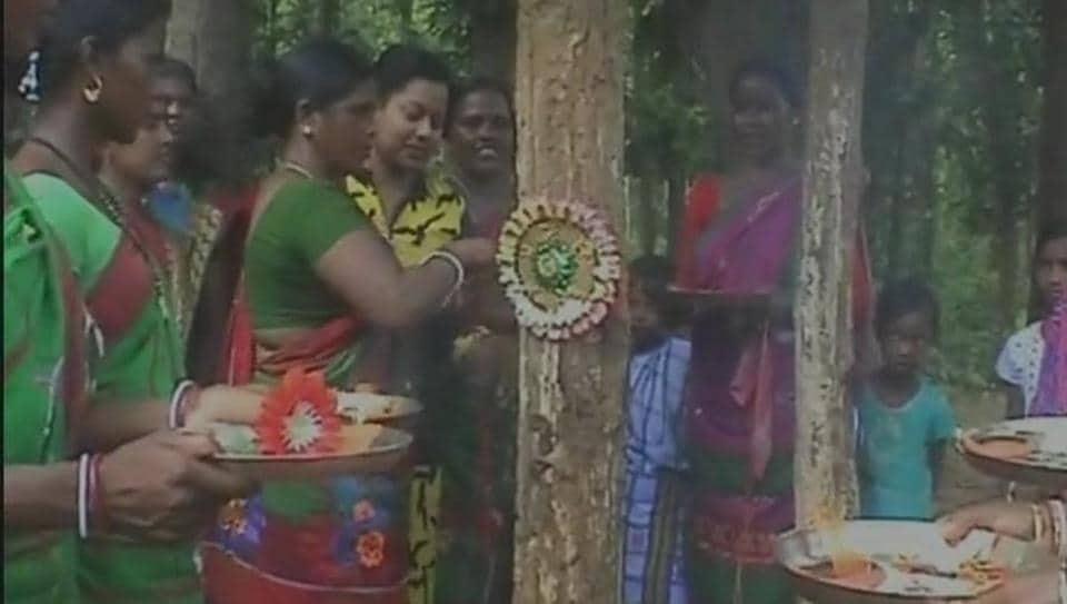 Tribal women tie rakhis on trees.