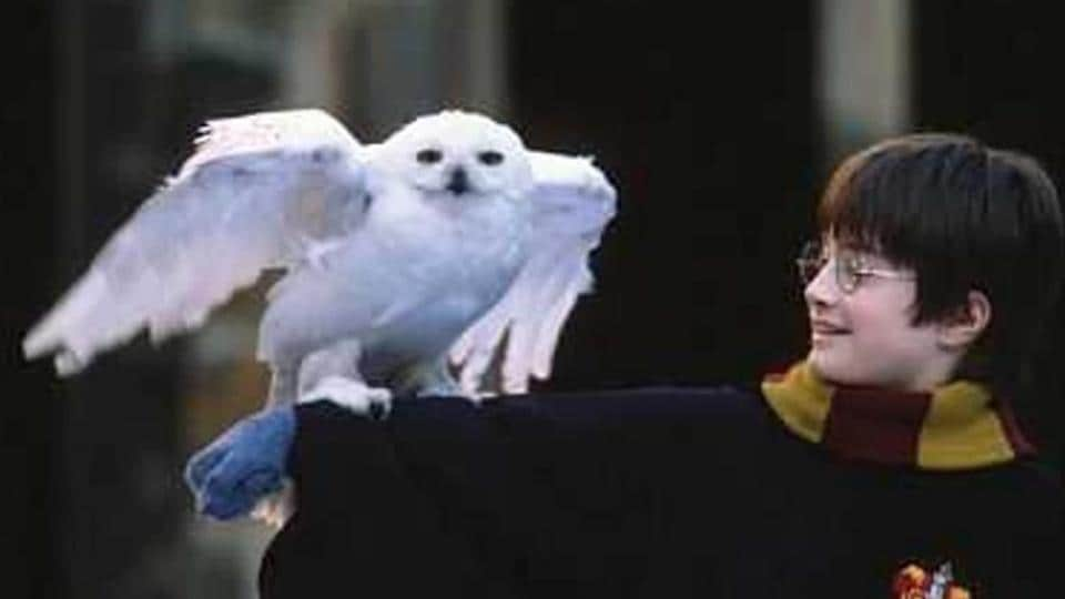 JK Rowling,Harry Potter,Harry Potter books