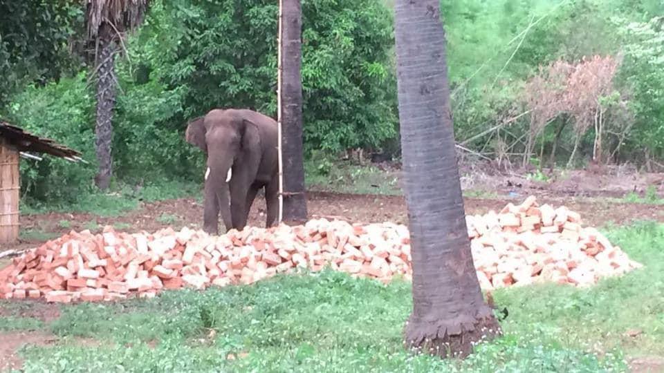 Bihar,Elephant,Jumbo