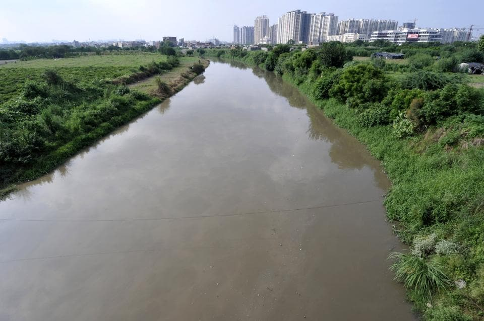 The Gautam Budh Nagar administration aims to plant 40,000 trees along Hindon river.