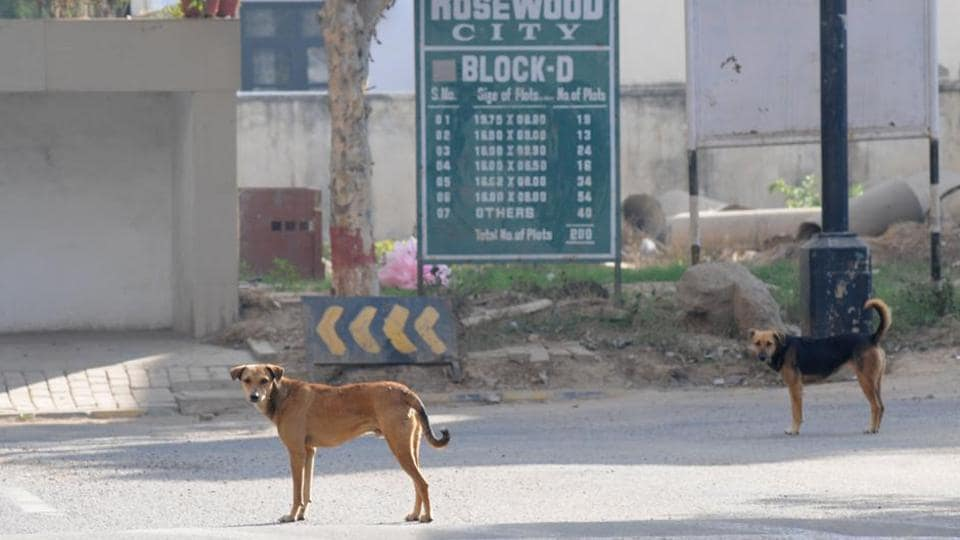 Rough estimates suggest there are around 2,500 stray dogs on the streets of Haldwani in Nainital district.