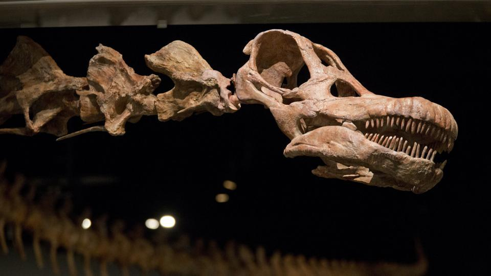 Dinosaur,Patagotitan,titanosaurs