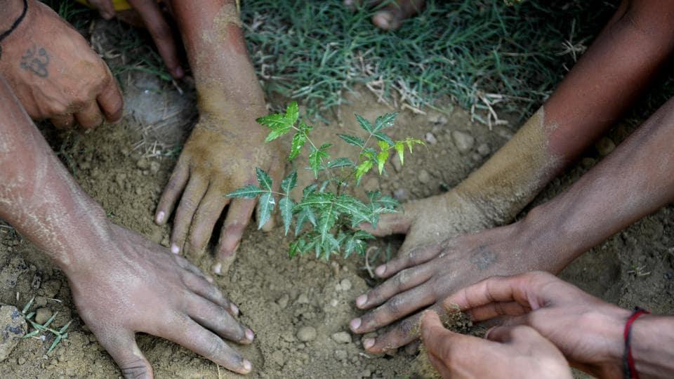 Delhi,delhi news,tree plantation