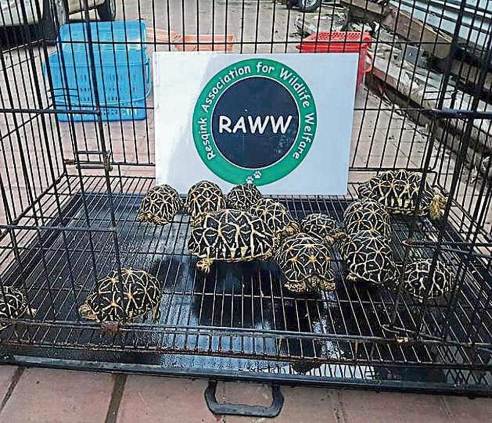 Byculla Zoo officials said the tortoises had died of natural causes