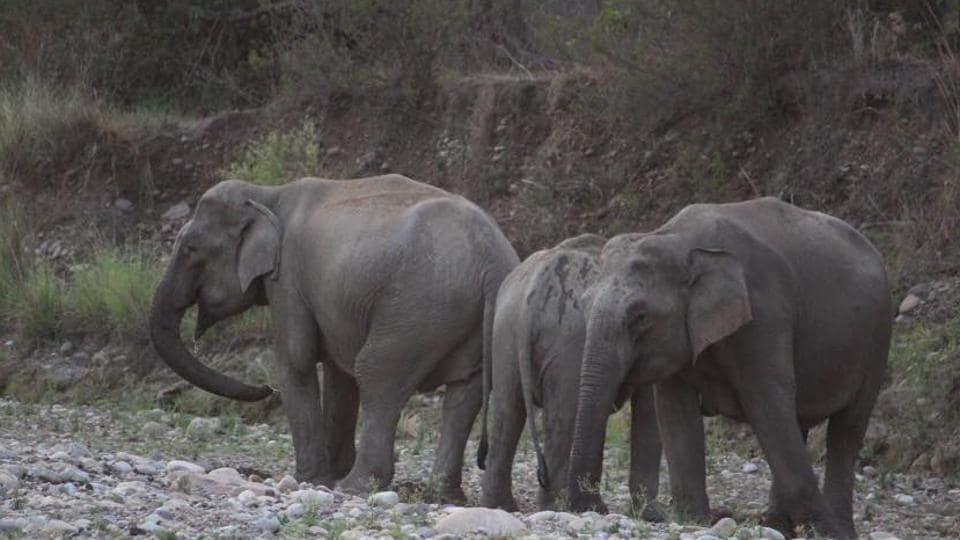 Elephants declining,Fall in elephants population,Harsh Vardhan