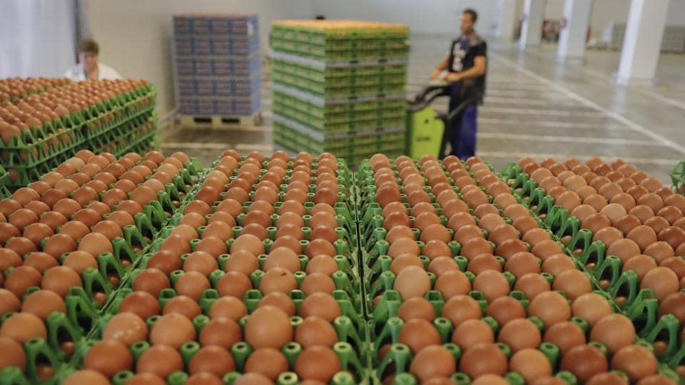 Contaminated eggs,World Health Organization,Fipronil