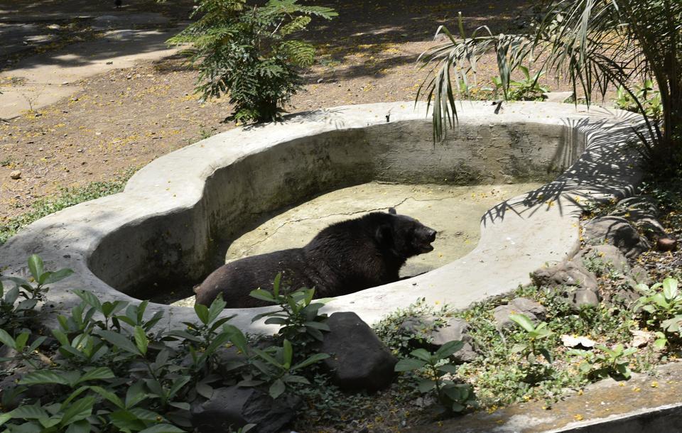 Mumbai,Byculla,endangered animals