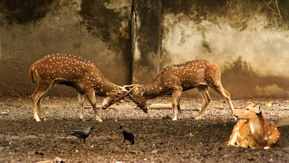 Byculla zoo,Veermata Jijabai Bhosale Udyaan,animal deaths