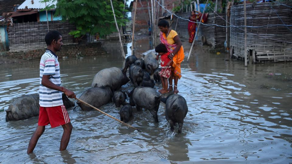 A Nepalese man guides his pigs through floodwaters in Janakpur, 300 km southeast of the capital Kathmandu, on August 14, 2017. Nearly 200 people have died and thousands have fled their homes as monsoon floods swept across Nepal, India and Bangladesh and the toll could rise as the extent of the damage becomes clear. Three days of relentless downpours sparked flash floods and landslides that have killed 91 people in Nepal, 73 across northern and eastern India and 22 in Bangladesh.