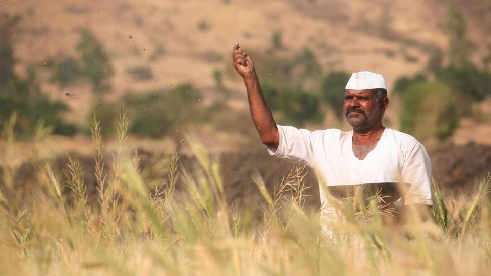 Maharashtra farmers,dry spell,rain