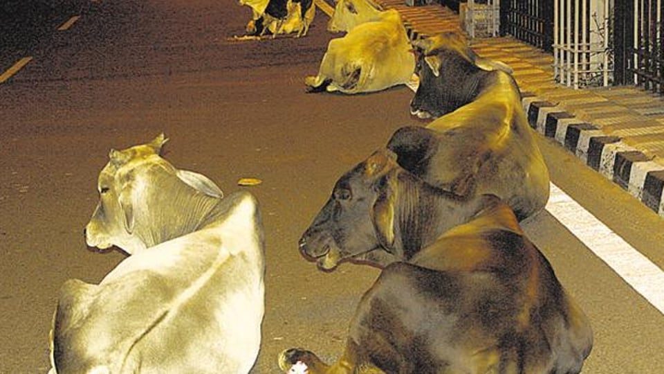 Stray cattle,Haryana,ban on cow slaughter