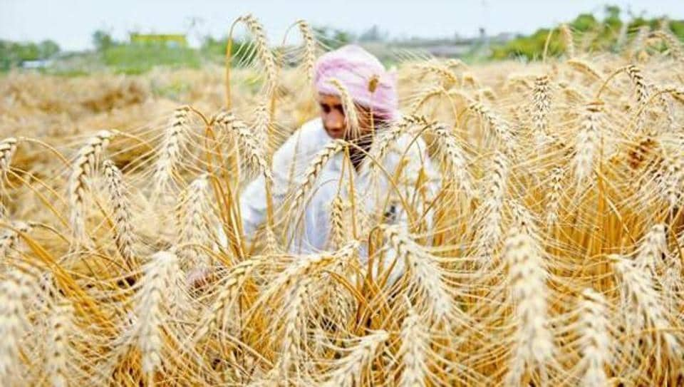 FCI employees,wheat embezzlement,Patiala