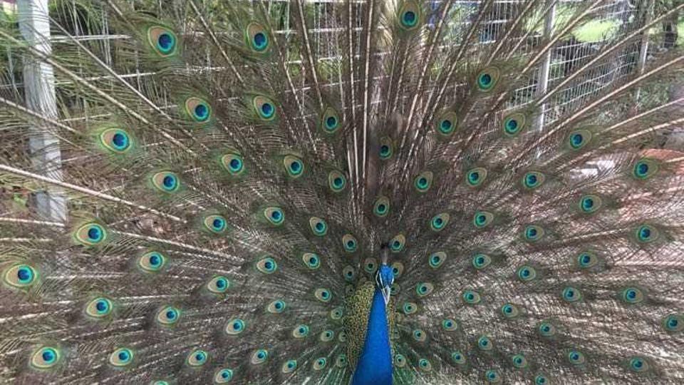Peacock,turtles,Mumbai