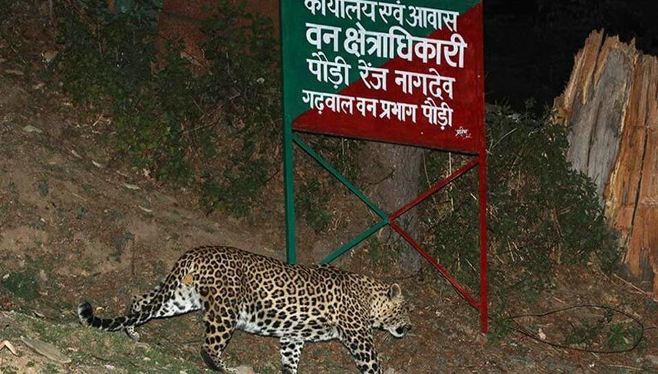 Uttarakhand,monsoon,leopards