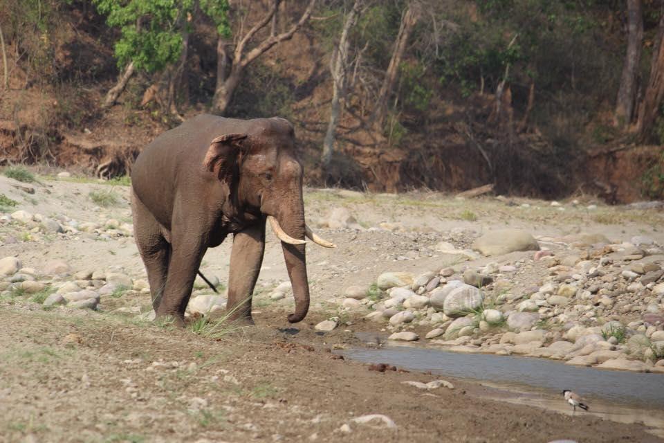 Selfie death,Elephant,Odisha